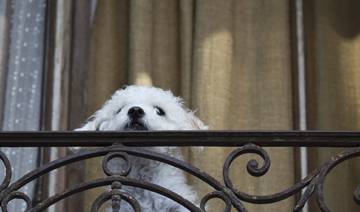 dog_balcony