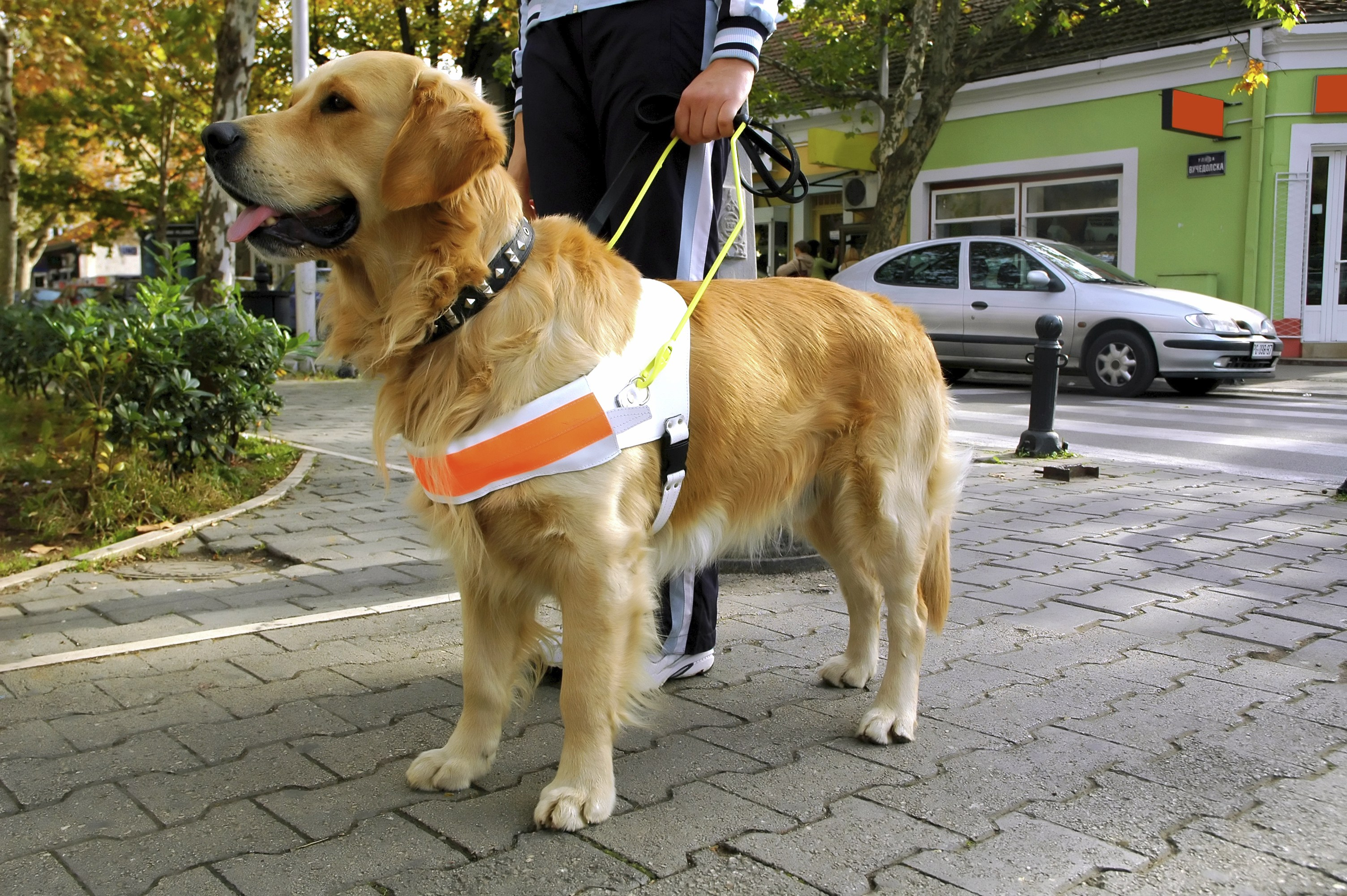 iStock_Guide-Dog