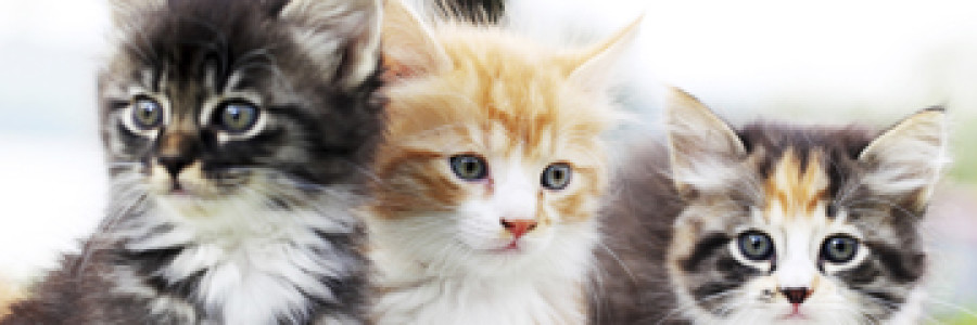 Pets in Condos: Enforcement of Pet Rules – Something New!